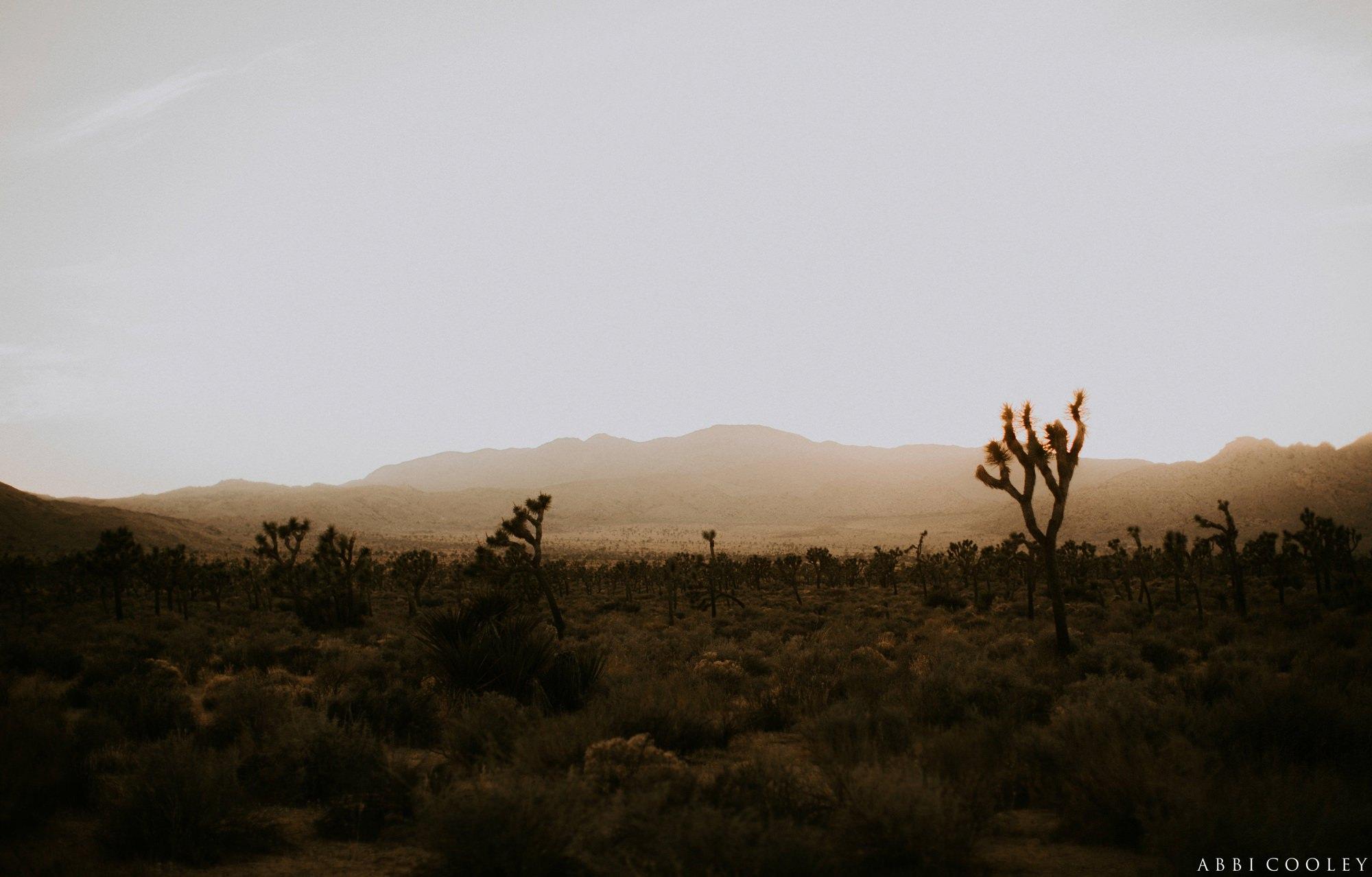 California desert esthetic Joshua Tree California Engagement || Abbi Cooley