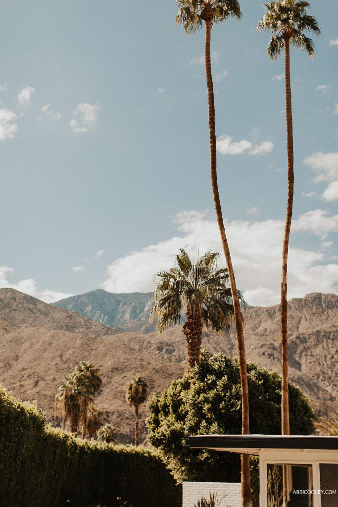 Desert esthetic wedding The Living Desert Wedding || Abbi Cooley