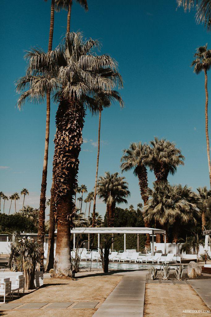 desert dream wedding The Living Desert Wedding